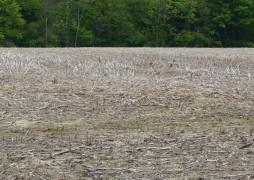 Mid May unplanted corn field